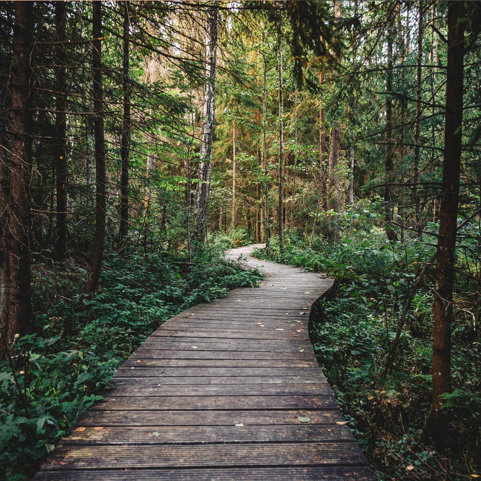 Path in woods Describing Eating Disorders for Van Dusen Nutrition