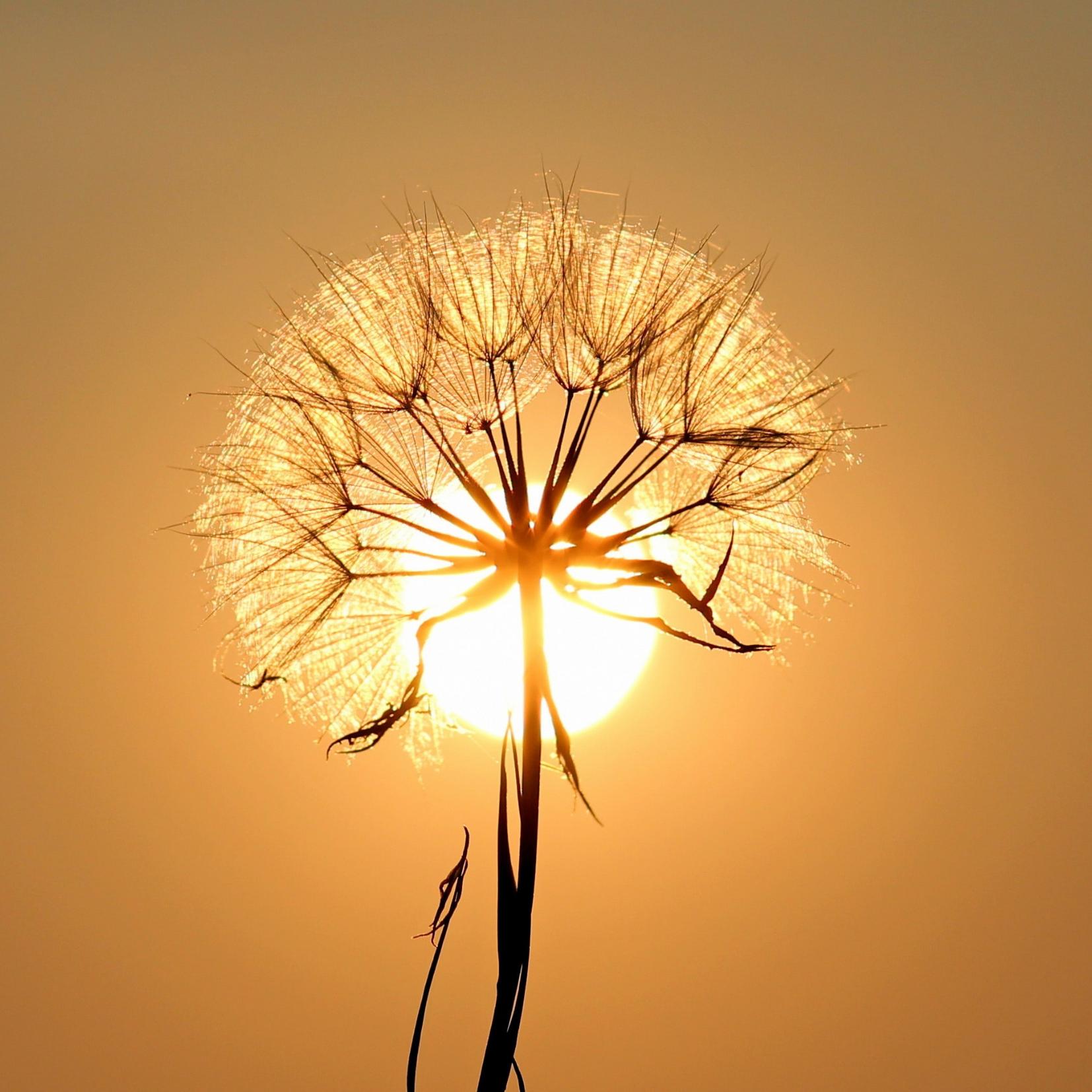 Weight & Body Concerns -sunlight through flower